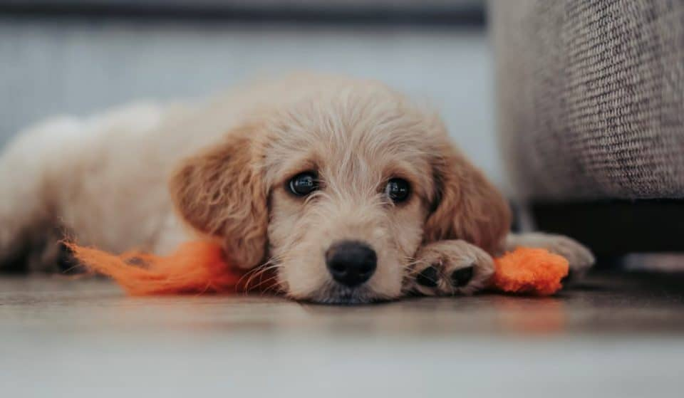A New Model Tenancy Agreement Will Help Give Renters The Right To Have Pets
