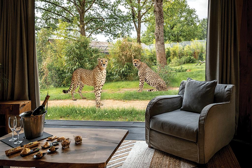 Cheetahs and elephants 1