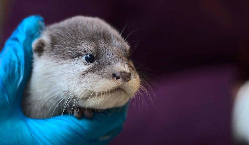 Adorable Baby Otters Were Born At Battersea Park Zoo, And The Pictures Are Just Too Much