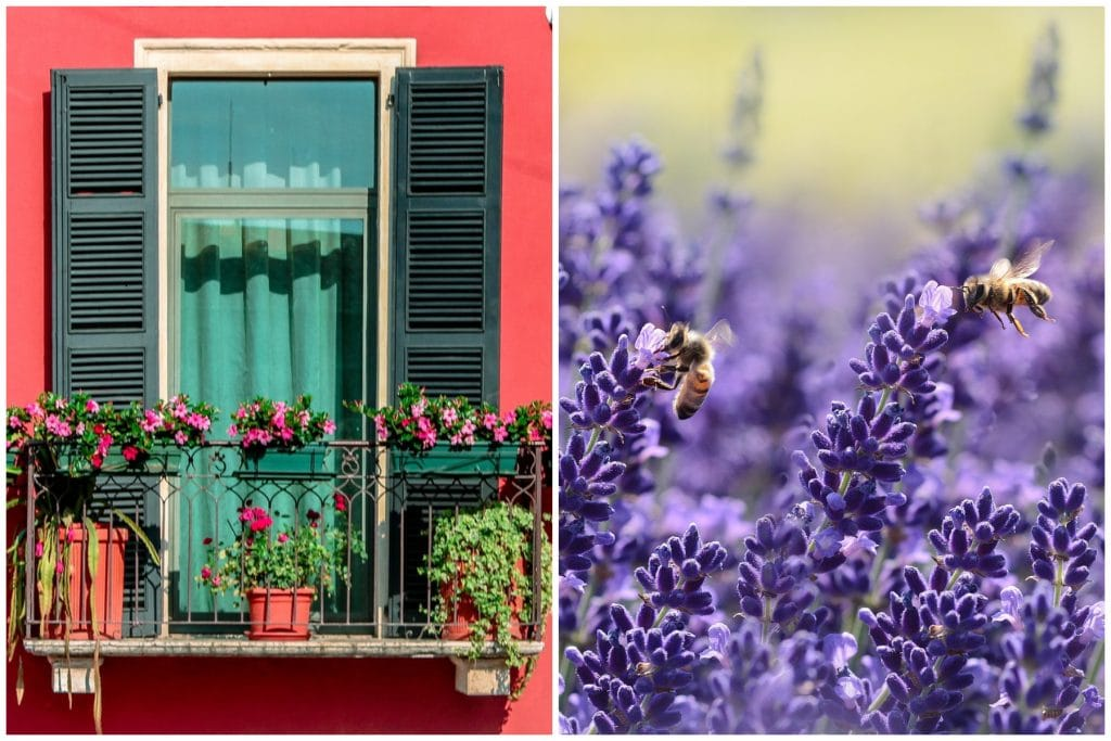 8 Easy Ways To Turn Your Balcony Or Garden Into A Bee's Paradise