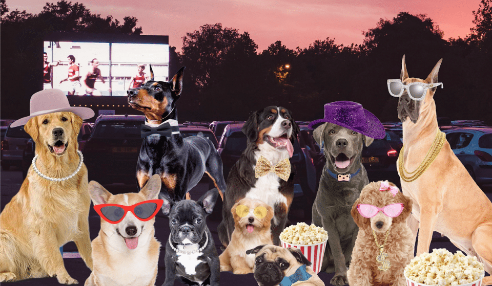 You Can Bring Your Pup To This Doggy Drive In Movie Night