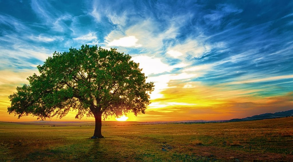 Here Is The Easiest Way To Plant A Tree For Earth Day This Year