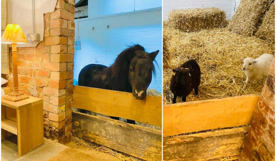 You Can Sleepover With A Miniature Horse At This 17th Century Manor