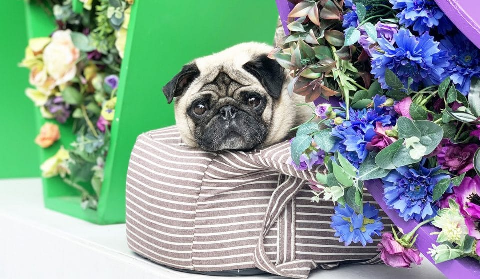 London's Pop-Up Pug, Dachshund And Cockapoo Cafés Are Returning This Summer