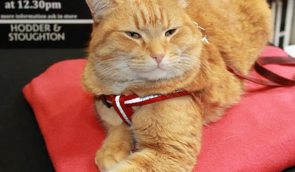 The Street Cat Named Bob Is Getting His Very Own Bronze Statue In Islington