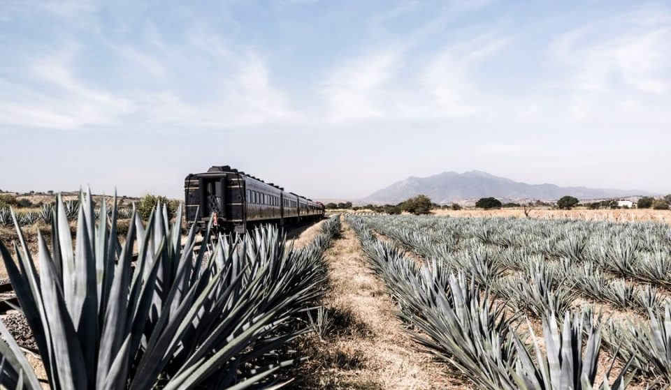 Hop On An All-You-Can-Drink Tequila Train And Explore The Mexican Countryside