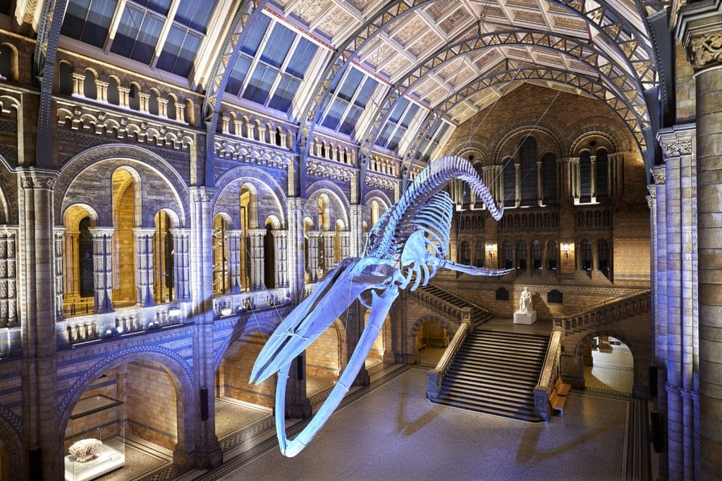 Natural History Museum visitor guide