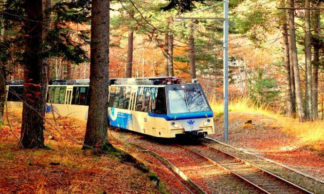 foliage train