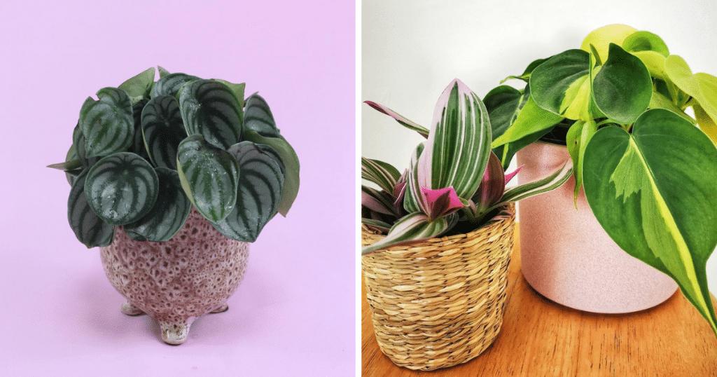 plant shops liverpool