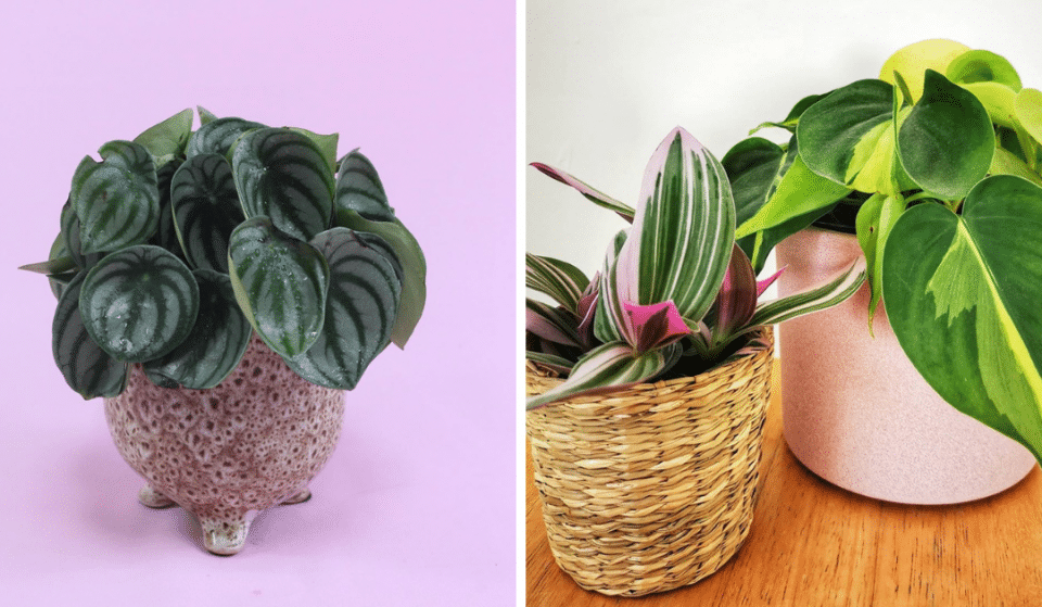 5 Of The Best Shops In Liverpool To Feed Your Plant Obsession