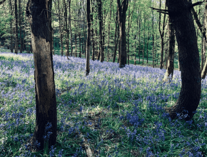 6 Of The Most Wonderful Woodland Walks Near Liverpool To Discover This Autumn