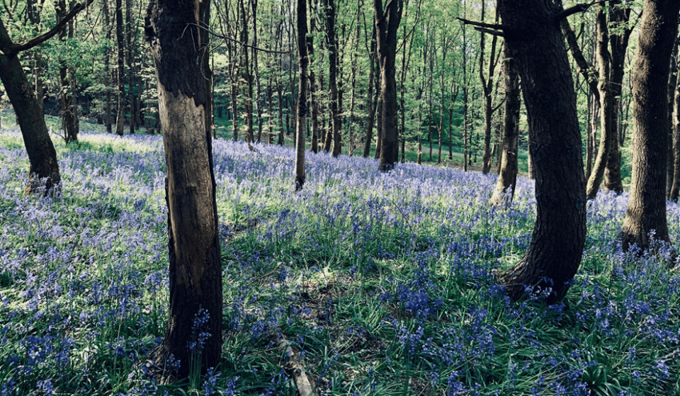 6 Of The Most Wonderful Woodland Walks Near Liverpool To Discover This Spring