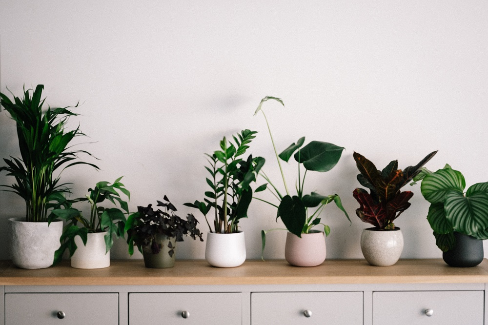 plants-in-a-row