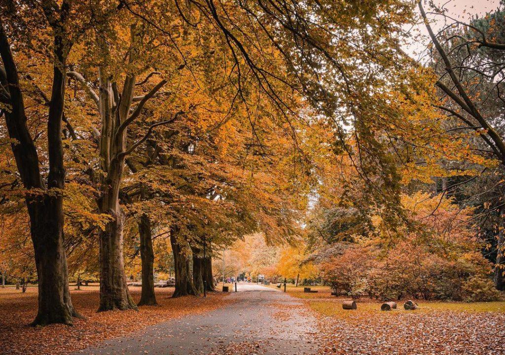 calderstones park mikescaptures autumn