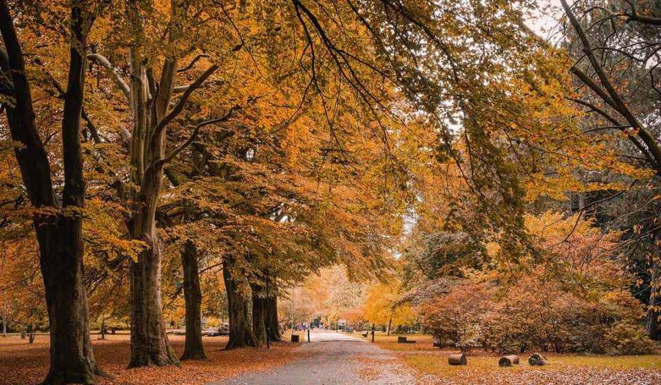 This Beautiful, Ancient Park Is The Perfect Place To Go And Get Lost • Calderstones Park