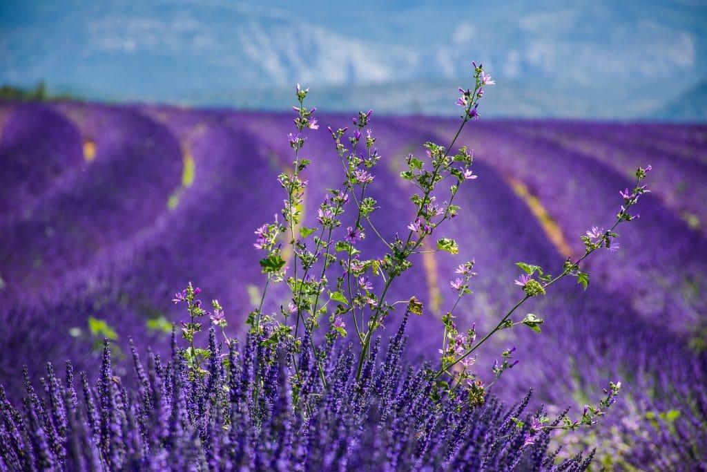 beautiful-flower-fields