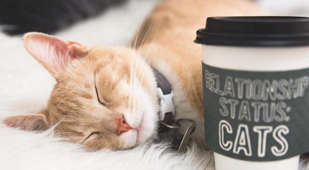 This Cat Café Is The Purrr-fect Hideout • Crumbs & Whiskers