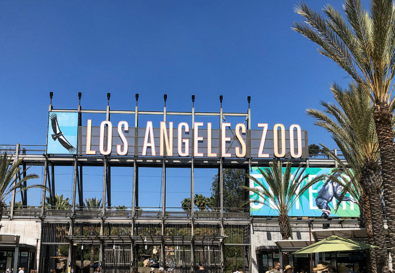 Don't Miss Out On These Summer Events Happening At The L.A. Zoo
