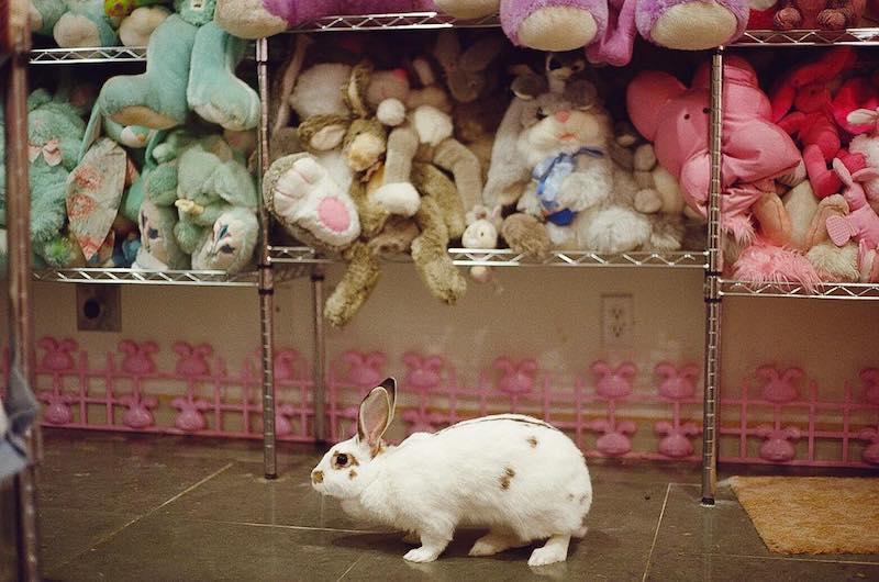 Museum Bunny Rabbit