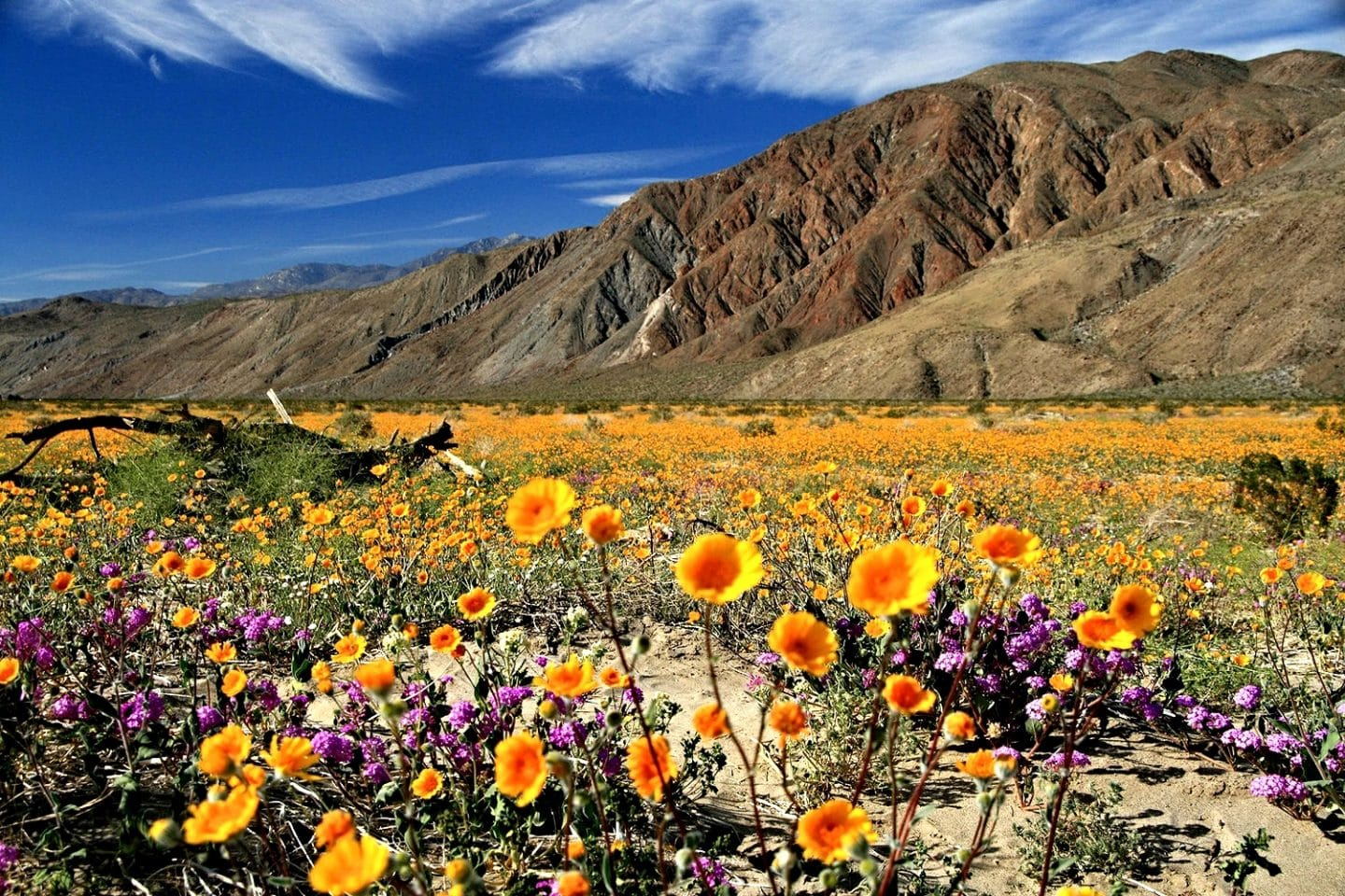 A Rare Super Bloom Of Desert Flowers Will Be The Pop Of Color Your IG Posts Need