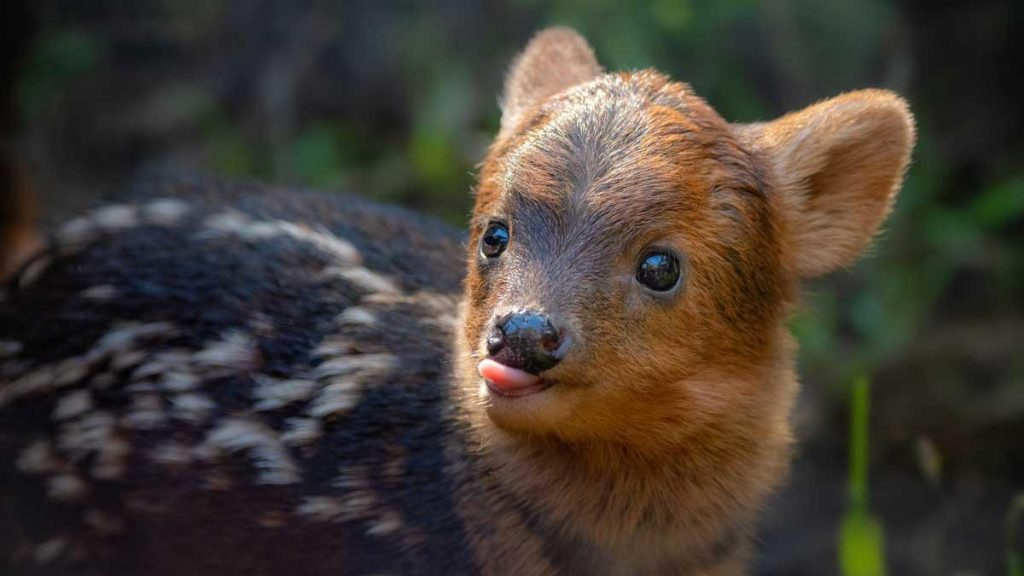 Fans Raised Over $2,000 To Name The Zoo's New Baby Deer After A Korean Pop Star