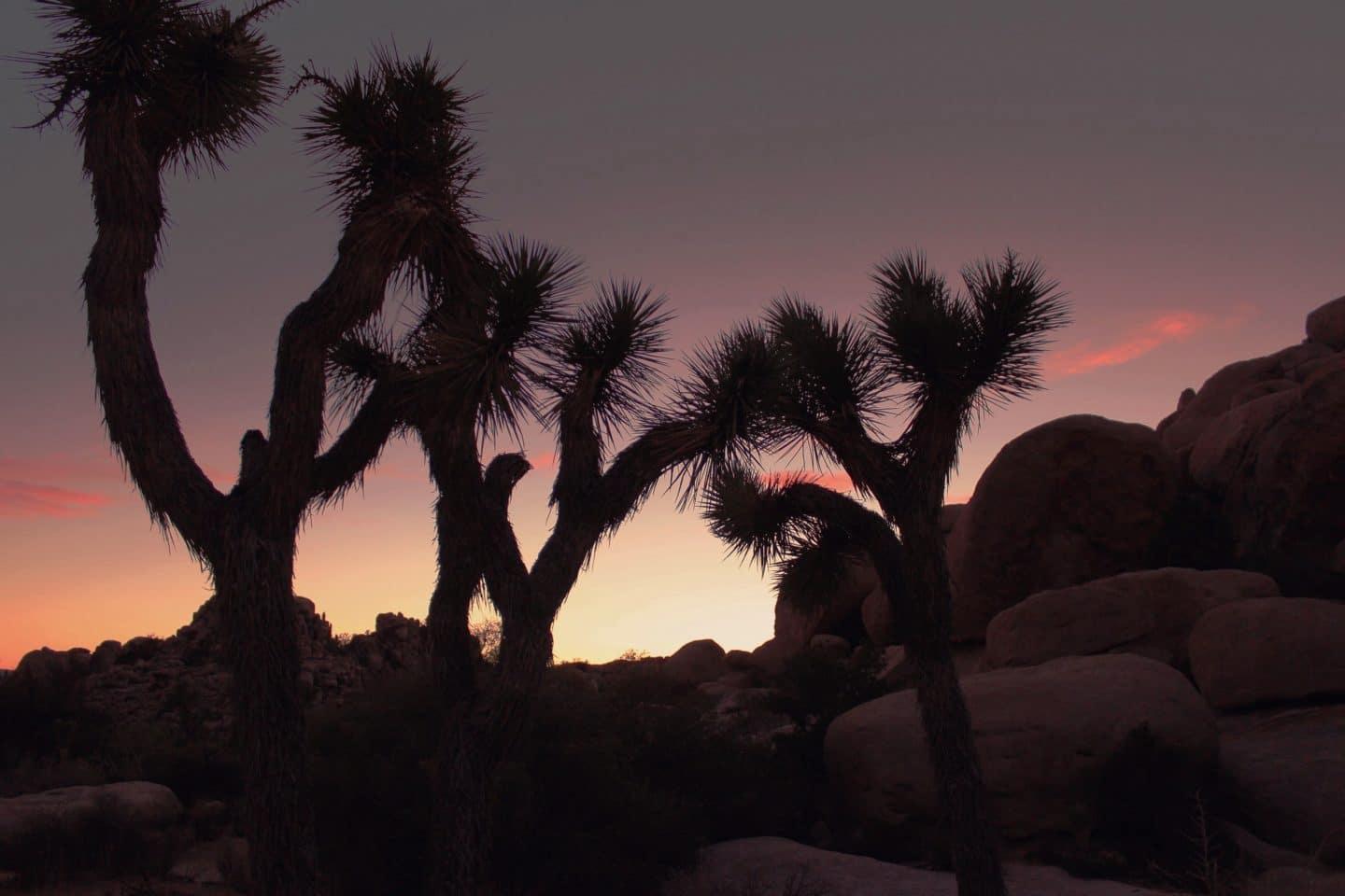 Update: Joshua Tree National Park Isn't Closing After All