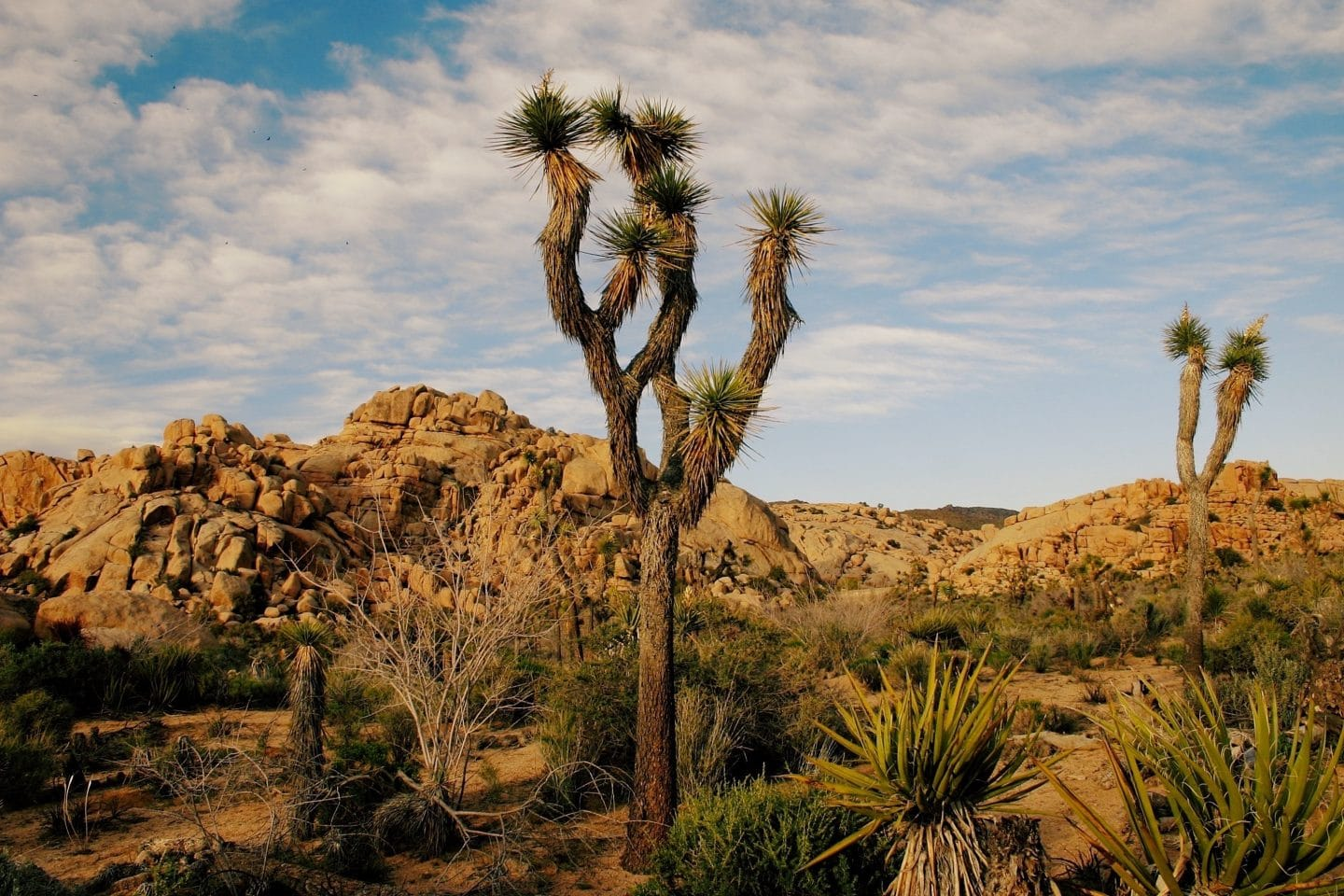 Joshua Tree National Park Closes Because Of Visitor Damage And The Government Shut Down