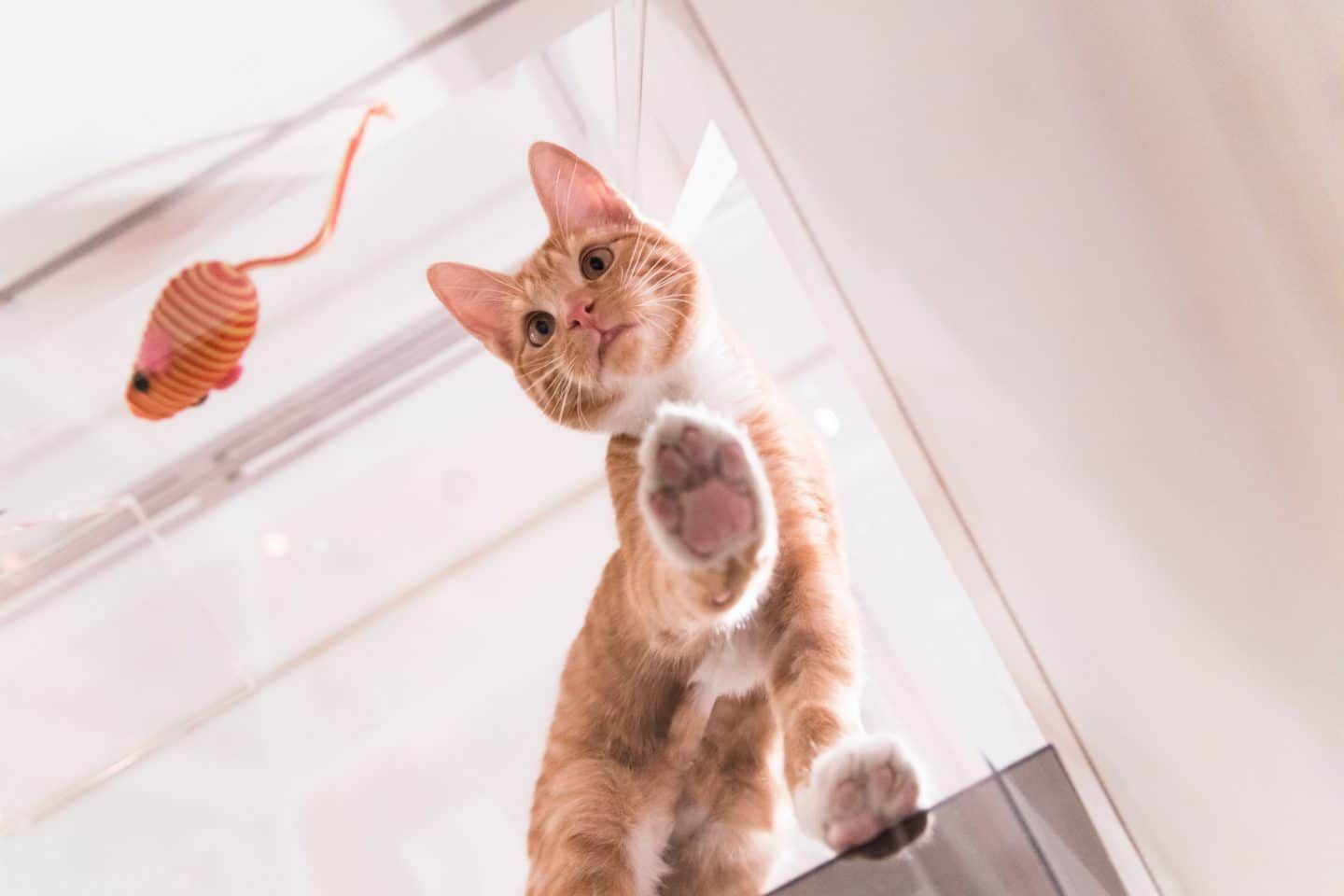 Cat Lovers Will Lose Their Cool At This Interactive Pop-Up Exhibition
