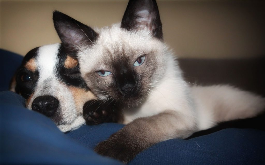 It's Official – Pet Stores In California Can Only Sell Rescued Animals