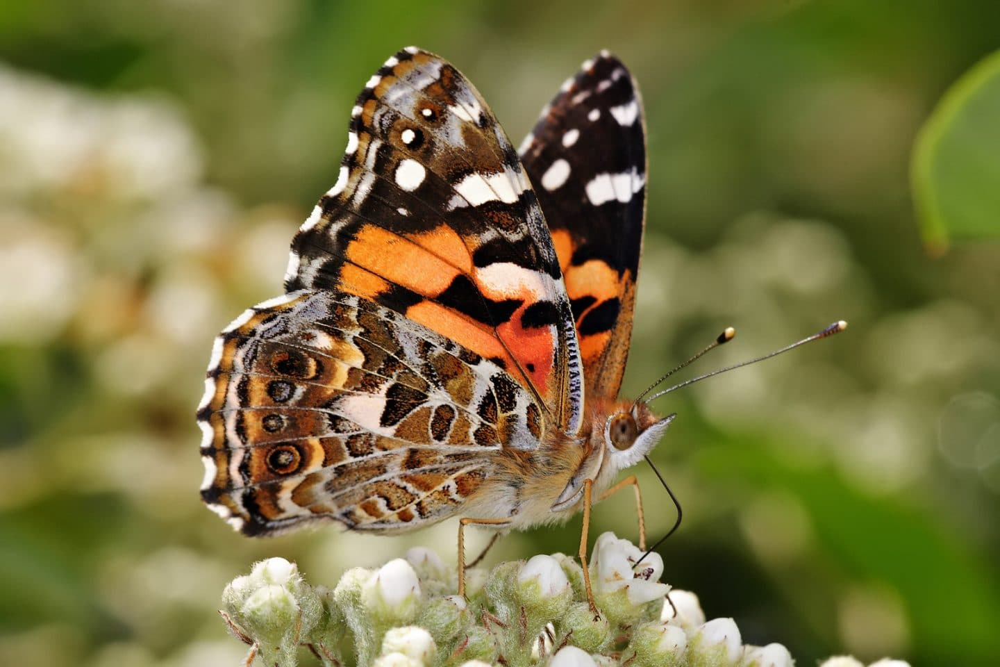 Keep An Eye Out For The Vast Amount Of Butterflies Who've Arrived In SoCal