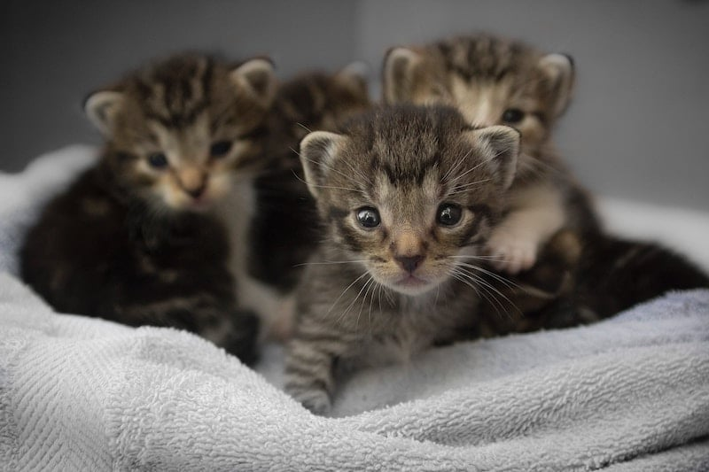 Long Beach Is Looking For Loving Volunteers To Bottle-Feed And Foster Kittens