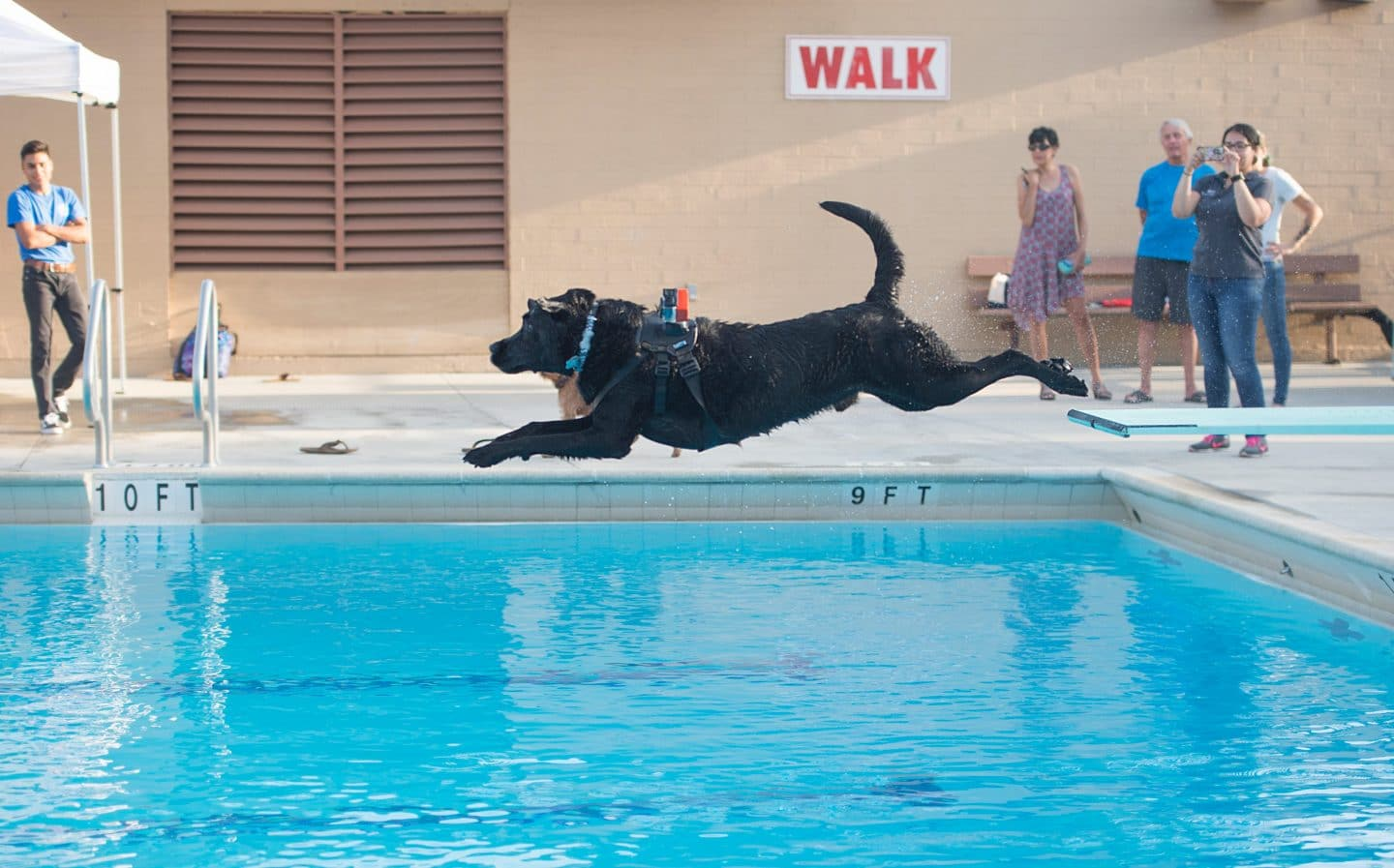Dogs Are Welcome To Swim In L.A. County Public Pools On Labor Day