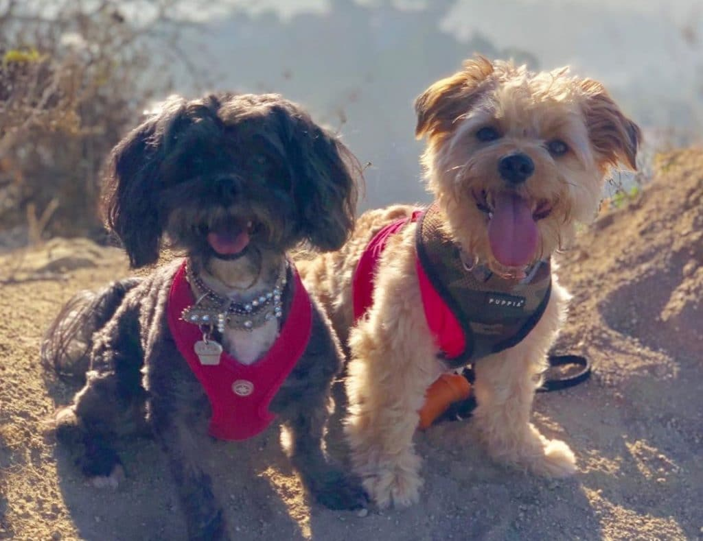 There's A Rescue In L.A. That Will Let You 'Rent-A-Dog' For A Hike Up Runyon Canyon