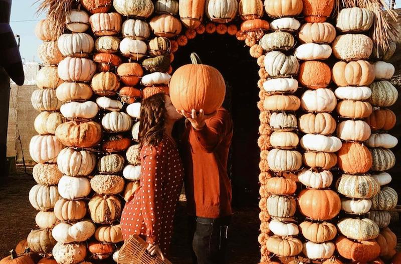 10 Best Pumpkin Patches (& Trails) In Los Angeles