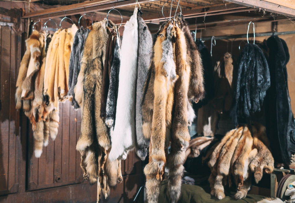 California Is Officially The First US State To Ban Fur Trapping