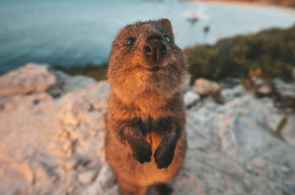 These Adorable Photos Of Animals In The Wild Are Sure To Bring A Smile To Your Face