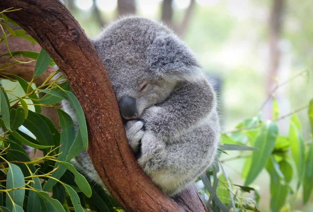 Take A Trip To The San Diego Zoo Without Having To Leave Your Couch