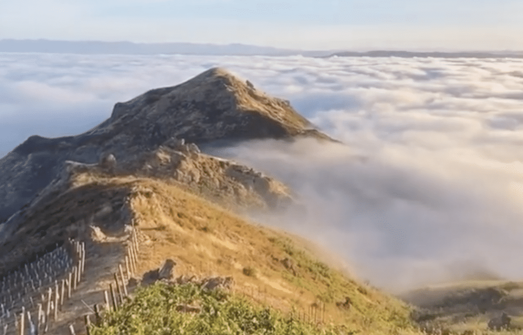 Walk Above The Clouds And Sip On Award-Winning Wine At This Private Malibu Estate