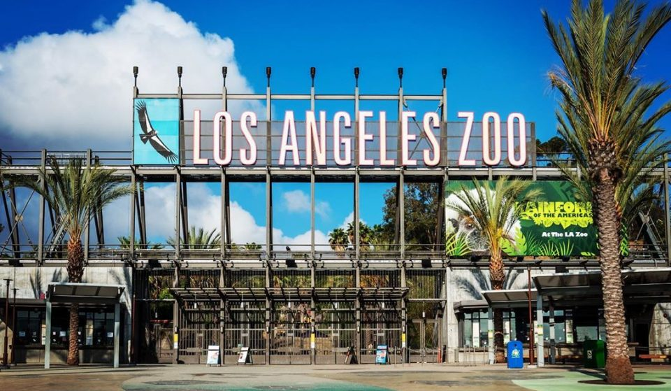 The L.A. Zoo Reopens Today, Here's What You Need To Know
