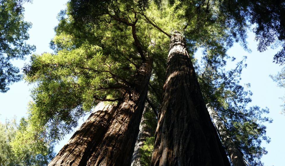 Big Basin Redwoods State Park Severely Damaged By Wildfires