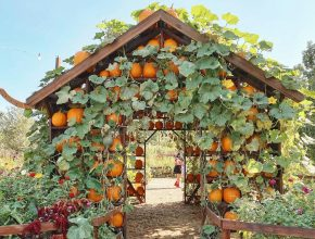 All The Wonderful Pumpkin Patches And Displays Opening This Month
