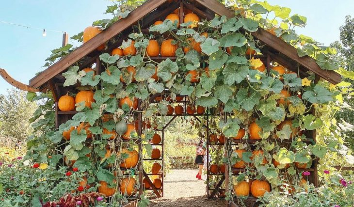 11 Of The Best Pumpkin Patches And Displays To Visit Around L.A. This Fall