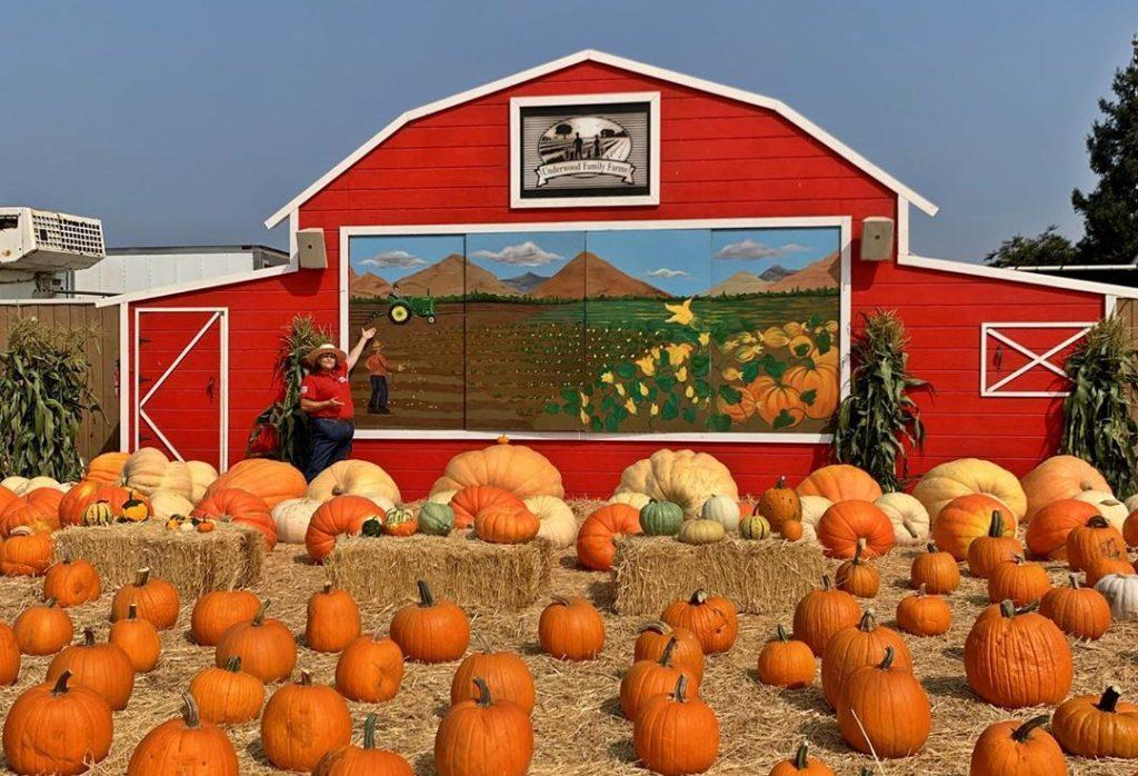 pumpkin patch picking