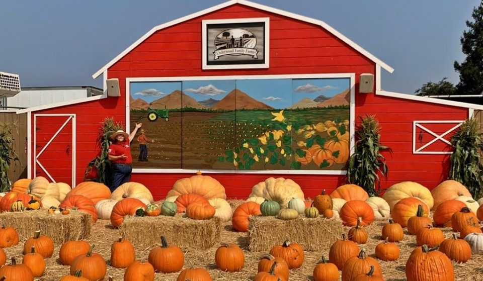 6 Wonderful Pumpkin Patches And Displays That You Can Visit In L.A. Right Now