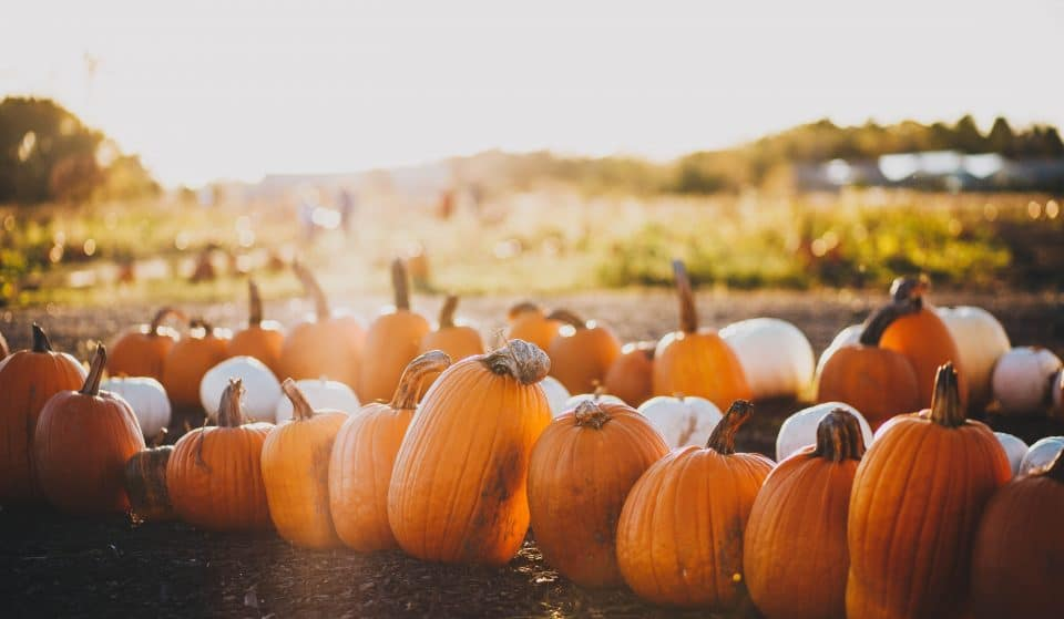 Mr. Jack O'Lanterns Pumpkin Patch Will Get You Into The Spooky Spirit