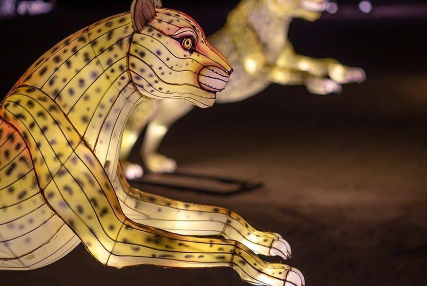 Stroll Through A Wonderland Of Luminescent Wildlife Lanterns In Palm Desert