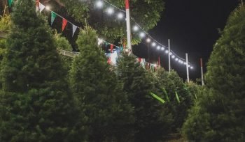 6 Places To Get A Real Christmas Tree In L.A.