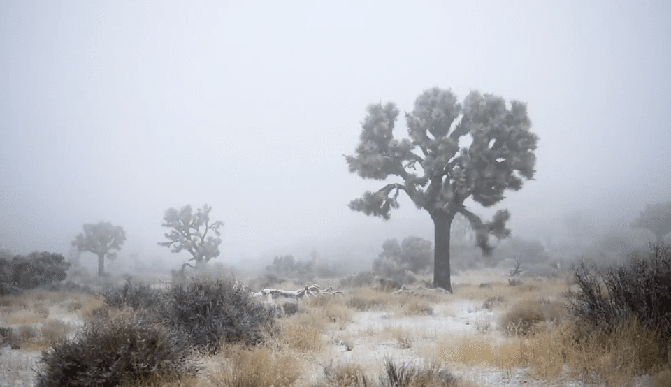 PHOTOS: Joshua Tree Is Covered In Snow And It's Utterly Breathtaking