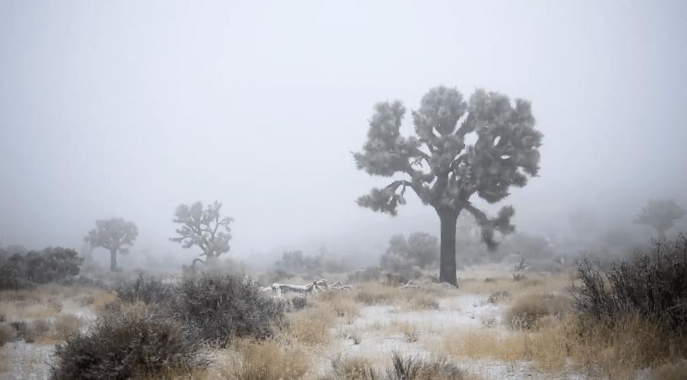 joshua tree snow