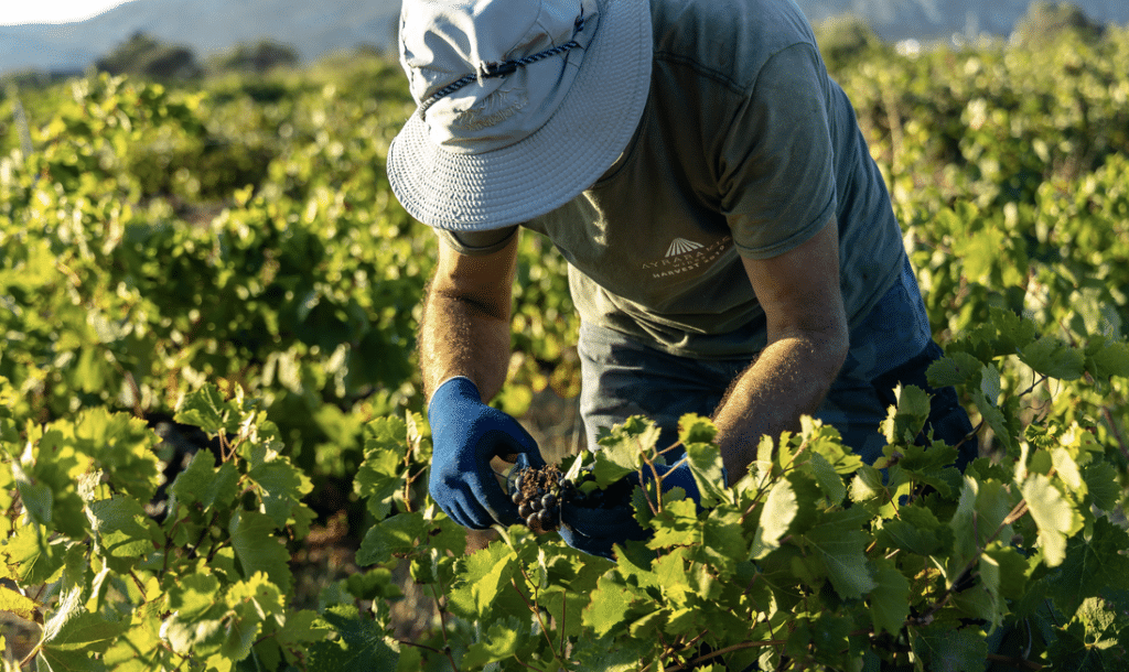 Vaccinations Begin For Farmworkers In Parts Of California